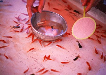 Kingyo sukui (paleta y peces)