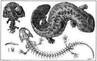 Dibujo de la salamandra gigante japonesa