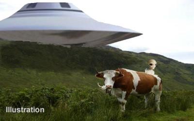 West Kilbride Saucer & Bull