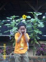 obin dan proyek bunga matahari - proyeknya kelas obin