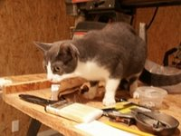 Sally looks at a paintbrush