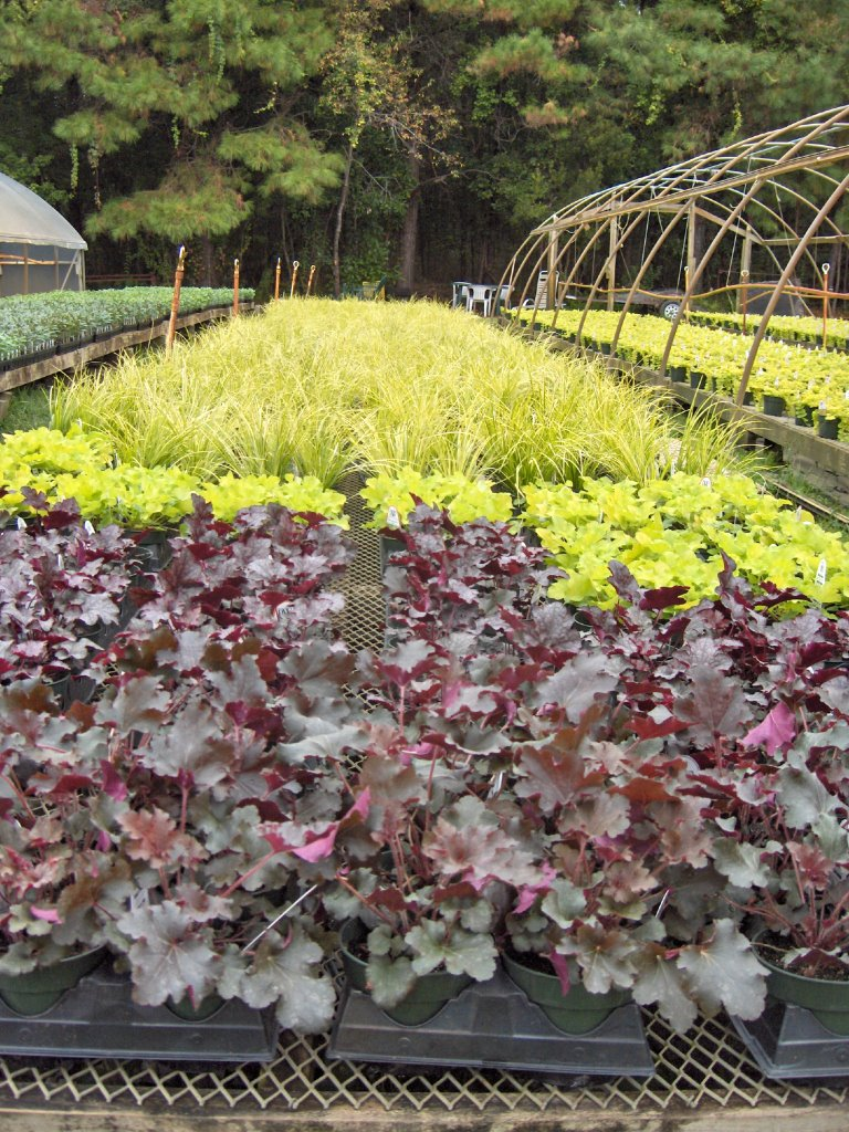 wilmington north carolina flower gardening u0026 horticulture news