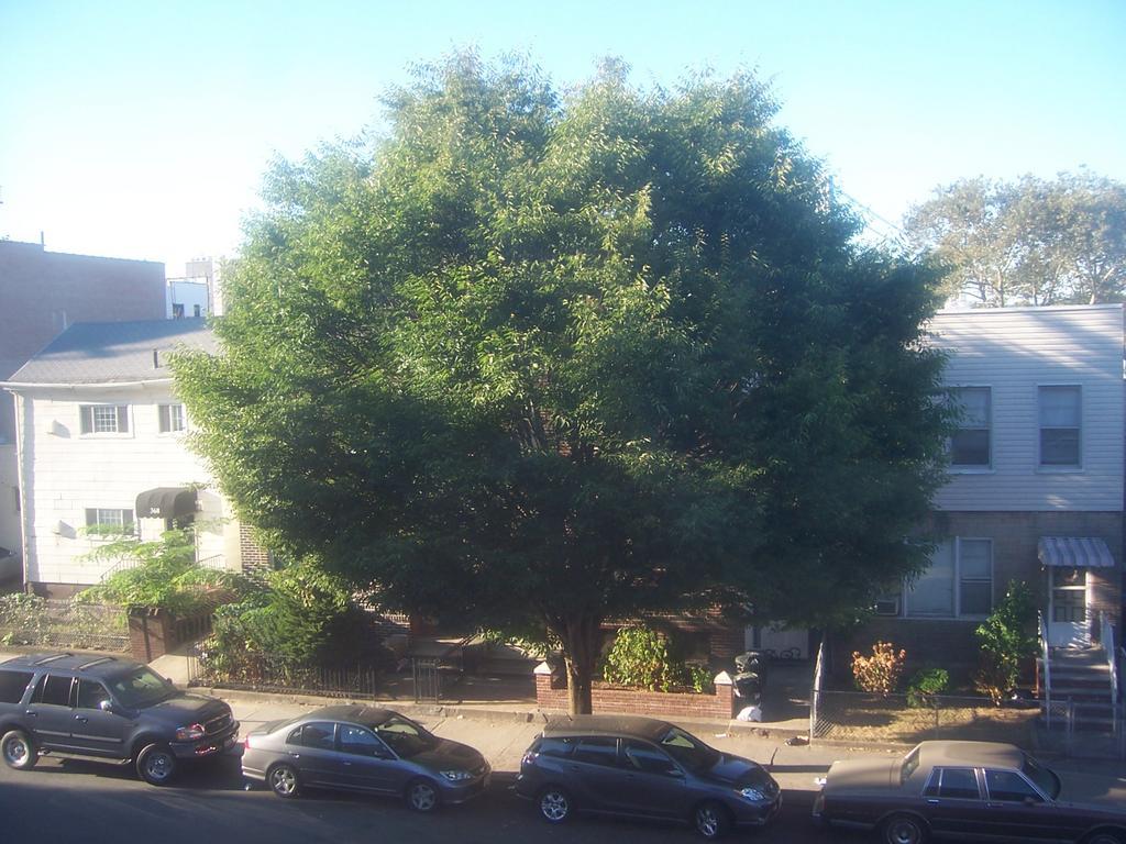 the tree grows in brooklyn pdf