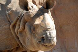 why the sumatran rhinoceros will be Example the wwf is running awareness programs, teaching people about why the sumatran rhino should be saved and therefore increasing awareness [1].