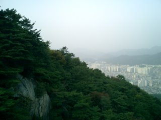 Forest and Busan City