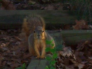 Squirrel eyeing my bird feeder