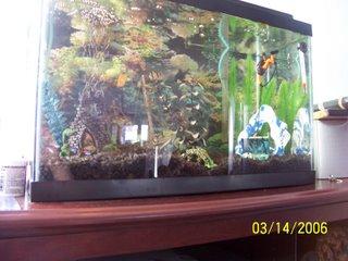 Derek's Aquarium