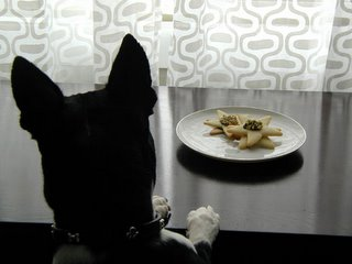 Groucho sniffs out the Christmas cookies