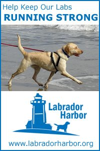 Labrador Harbor