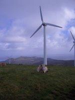 Vaca, muínho de vento, Serra da Capelada, San Andrés de Teixido