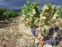 La Rioja, vinho
