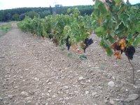La Rioja, vinhas