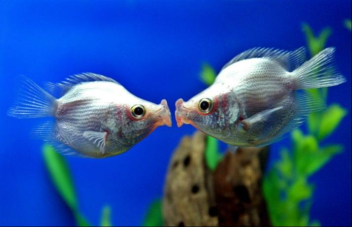 http://photos1.blogger.com/blogger/450/2241/1600/fishkiss.1.jpg
