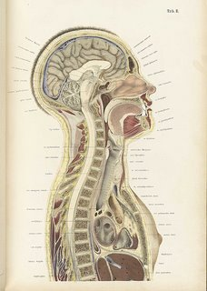 vintage anatomical chart
