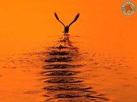 dusk on the delta