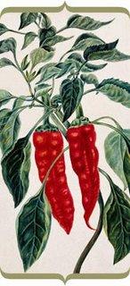 botanical print - chilli pepper