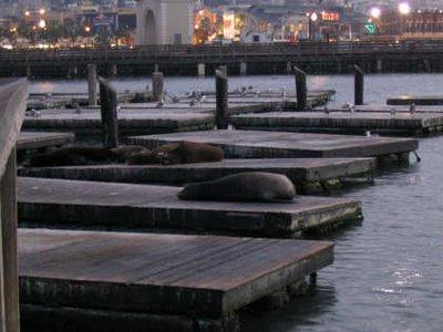 leones marinos en Puerto de San Francisco