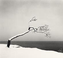 Kussharo Lake Tree, Study 3