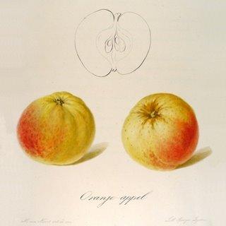 Oranje-Appel