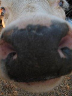 Sarah's nose