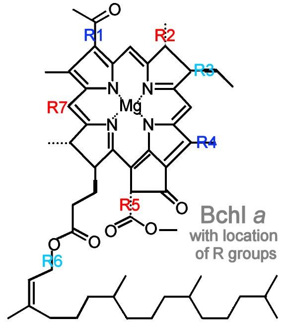 photosynthesis  bacteriochlorophylls