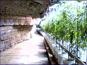 picture cave Marijuana Tennessee