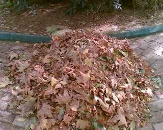 süpürülmüş yapraklar