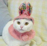cute cat bunny