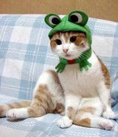 froggy kitty