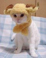 Horned Cat