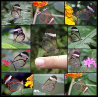 Collection of transparent butterflies
