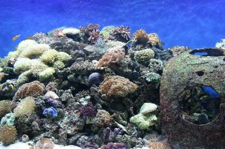 Aquaria KLCC - Marine living