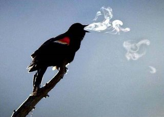 picture of bird smoking