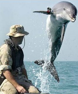amazing picture of dolphin equipped with camera