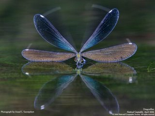 national geographic pictures