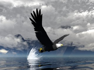 eagle catch fish