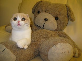 cat and teady bear