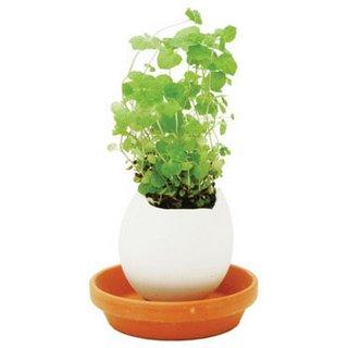 eggshell mini vase - plant mint