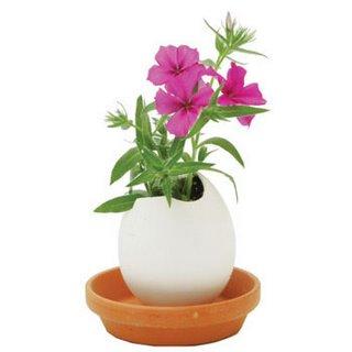 eggshell mini vase - plant phlax