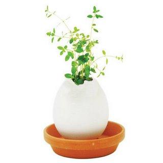 eggshell mini vase - plant thyme