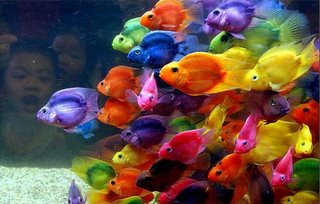 amazing animal (fishes) pictures