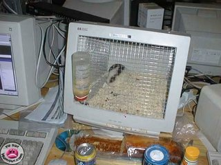 monitor to hamster's cage