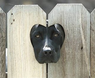 black Labrador-Dalmatian