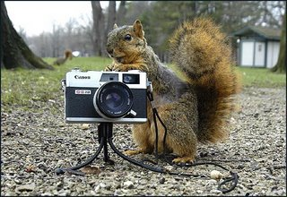 Squirrel The Photographer