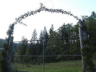 tree can be bent to anything you like