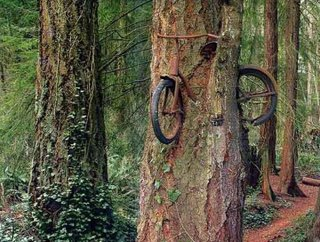 bicycle stuck at tree trunk