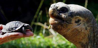 it's a boy.. tortoise