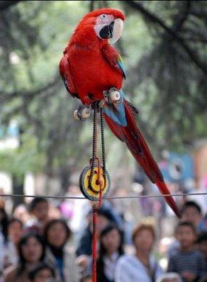 parrot performance
