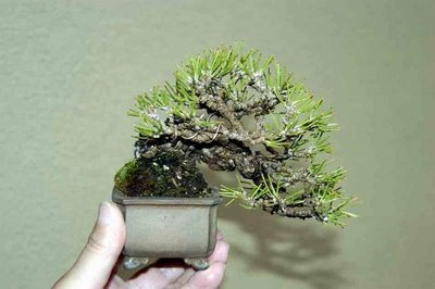 bonsai & nursery