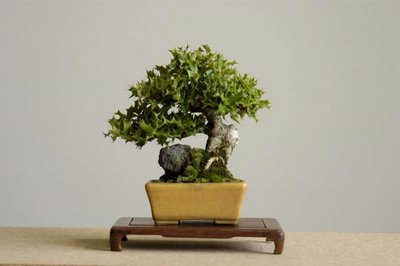 take care of bonsai